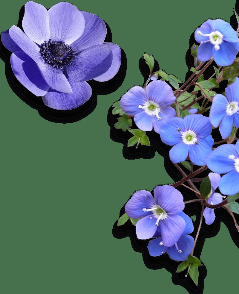 Przedszkole Publiczne Kwiatki Świętego Franciszka